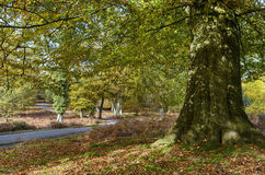 Autumn in the New Forest Royalty Free Stock Photography