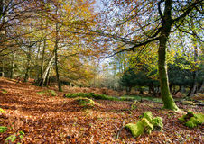 Autumn in the New Forest Royalty Free Stock Photos