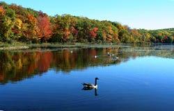 Autumn of New York Stock Photos