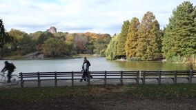 Autumn in New York City stock video footage