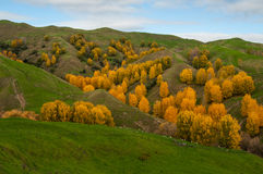 Autumn in New Zealand Royalty Free Stock Image