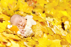 Autumn newborn baby sleeping in maple leaves. Stock Photos