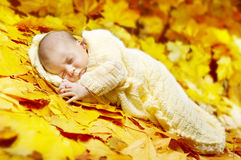 Autumn newborn baby sleeping in maple leaves. Royalty Free Stock Photo