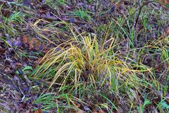 Autumn: withered bush of grass. Royalty Free Stock Photos