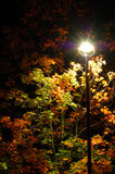 Autumn night. Fragment of a beautiful tree in the autumn night, lit by the streetlight Stock Images
