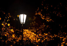 Autumn night. Street light in an park in Prague on a windy Autumn night Stock Image