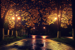 Autumn night landscape in the park Stock Photos
