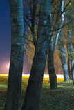 Autumn night shot of tree in the park. Autumn colorful night shot of tree in the park with light source in the background Royalty Free Stock Photo