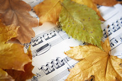Autumn nocturne. Music sheet with autumn leaves. Close-up view Stock Photography
