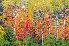 Autumn North Wood Stock Afbeeldingen