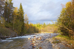 Autumn northern landscape - forest and river Royalty Free Stock Photography
