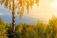 Autumn nostalgia. Lonely birch on the hill Royalty Free Stock Photo