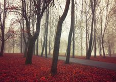 Autumn November foggy landscape. Deserted autumn park alley with bare trees and dry fallen orange autumn leaves. Mysterious autumn nature scene royalty free stock photos