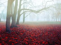 Autumn November foggy landscape. Deserted autumn park alley with bare trees and dry fallen orange autumn leaves. Autumn picturesque November foggy landscape stock image
