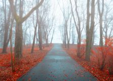 Autumn landscape - autumn park alley with trees and dry fallen orange autumn leaves in the fog. Autumn November landscape - foggy autumn park alley with bare stock images