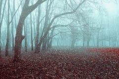 Autumn November landscape. Foggy autumn park with snow falling on the dry autumn leaves. The end of the autumn season royalty free stock photos