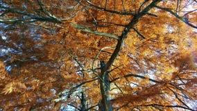 Autumn in Novi Sad. Beautiful tree in Novi Sad Stock Images