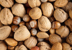 Autumn nuts Royalty Free Stock Image