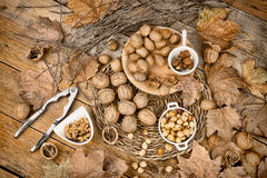 Autumn nuts Stock Images