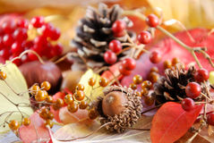 Autumn nuts nuts and berries Royalty Free Stock Photos