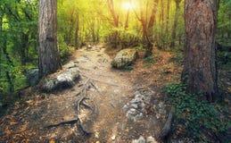 Autumn Into o caminho da floresta na floresta Fotos de Stock Royalty Free