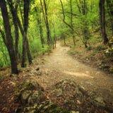 Autumn Into o caminho da floresta na floresta Foto de Stock