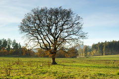 Autumn oak stock photo