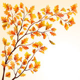 Autumn oak branch Royalty Free Stock Photography