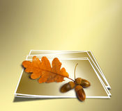 Autumn oak branch with acorns Stock Photography