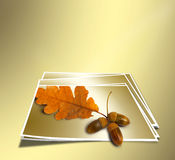 Autumn oak branch with acorns on abstract gold background Royalty Free Stock Image