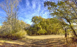 Autumn Oak Forest Stock Images