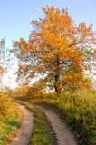 Autumn in the oak forest. autumn colored leaves. golden autumn i royalty free stock photo