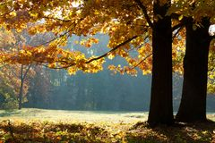 Autumn in the Oak Grove. The colorful autumn landscape Stock Image