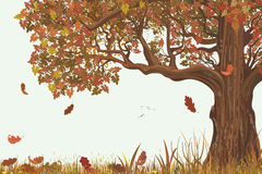 Autumn oak. Vector autumn landscape with oak tree Royalty Free Stock Images