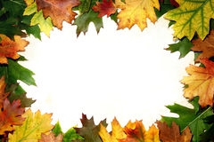 Autumn oak leaf frame Royalty Free Stock Photo