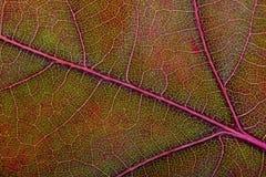 Autumn Oak Leaf Macro Stockfoto