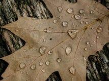 Autumn Oak Leaves Lizenzfreie Stockfotos