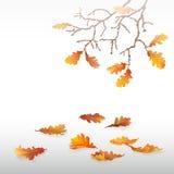 Autumn Oak Leaves illustration stock