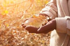 Autumn Oak Leaves Photos libres de droits