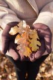 Autumn Oak Leaves Images stock