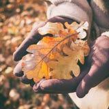 Autumn Oak Leaves Image stock