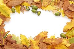 Autumn oak leaves and acorns border. A border of gold, orange, brown and green oak leaves and acorns against a white background Stock Image