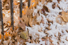 Autumn oak leaves along an iron fence under a light snow Royalty Free Stock Photo