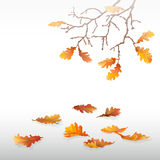 Autumn oak leaves. Autumn oak leaves on the branches in the fog. Fallen leaves.  objects. Flying leaves. Yellow, orange, red, maroon, brown leaves on a light Royalty Free Stock Image