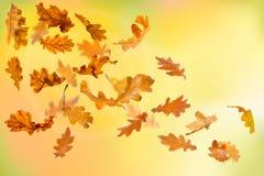 Autumn oak leaves falling. Down on natural background stock illustration