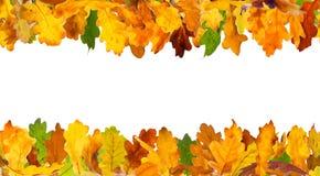 Autumn oak leaves frame Stock Photo