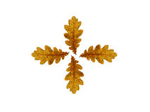 Autumn oak leaves. Nature background textures season pattern foliage Stock Images