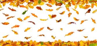 Autumn oak leaves. Seamless pattern of autumn oak leaves falling down on white background royalty free illustration