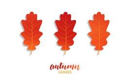 Autumn oak leaves set. Vector fall autumn leaves collection.  stock illustration