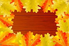 Autumnal leaf of oak. Autumn - oak leaves - vector background, Autumnal leaf of oak, Quercus Royalty Free Stock Images